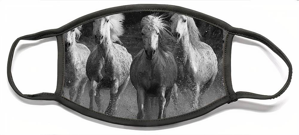 Camargue Face Mask featuring the photograph Camargue Horses Running by Carol Walker