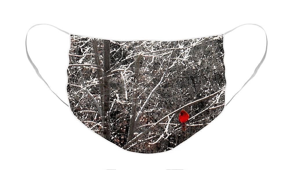 Winter Landscape Face Mask featuring the photograph Cardinal by Steve Karol