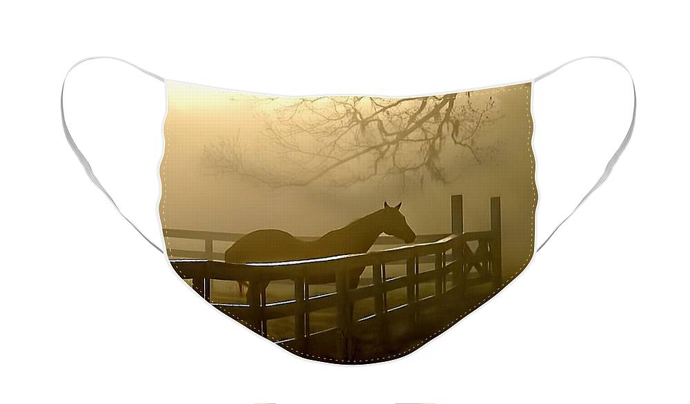 Horse Face Mask featuring the photograph Coosaw Early Morning Mist by Scott Hansen