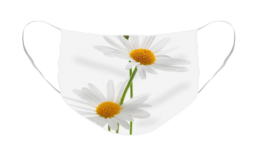 Daisy Face Mask featuring the photograph Daisies on white background by Elena Elisseeva