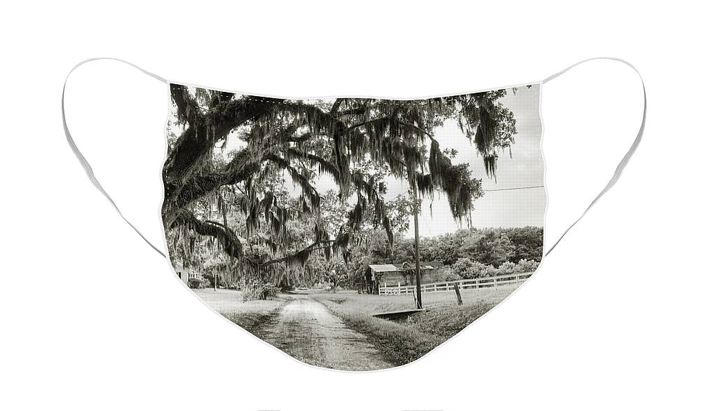Live Oak Face Mask featuring the photograph Dirt Road on Coosaw Plantation by Scott Hansen