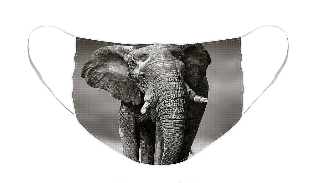 Elephant Face Mask featuring the photograph Elephant approach from the front by Johan Swanepoel