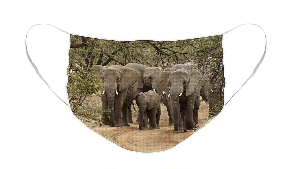 Africa Face Mask featuring the photograph Elephants Have the Right of Way by Michele Burgess