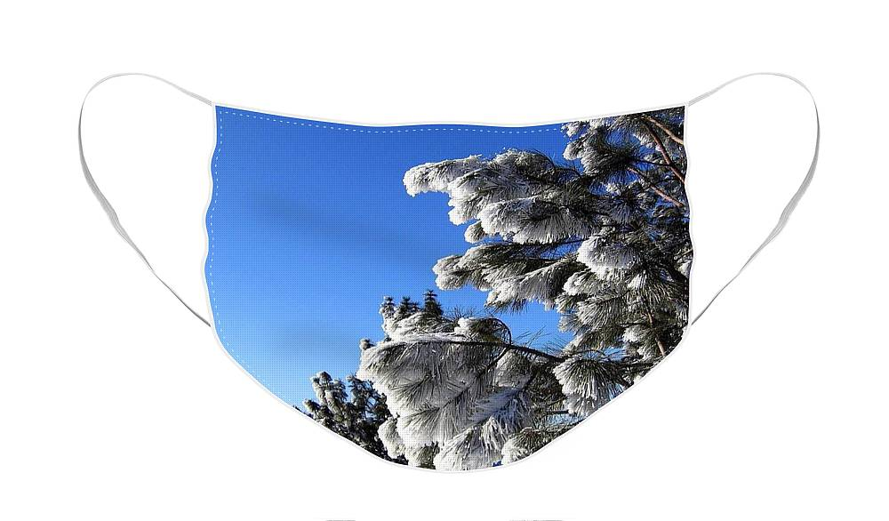 Frost Face Mask featuring the photograph Frosty Limbs by Will Borden