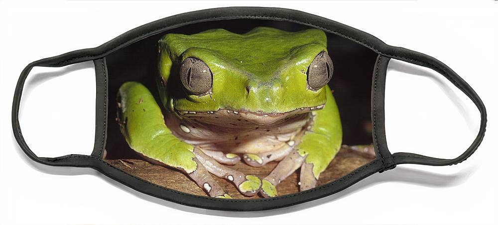 Feb0514 Face Mask featuring the photograph Giant Monkey Frog Venezuela by Gerry Ellis