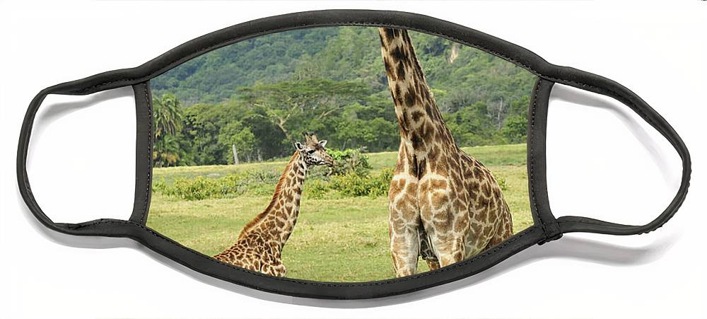 Thomas Marent Face Mask featuring the photograph Giraffe Mother And Calftanzania by Thomas Marent