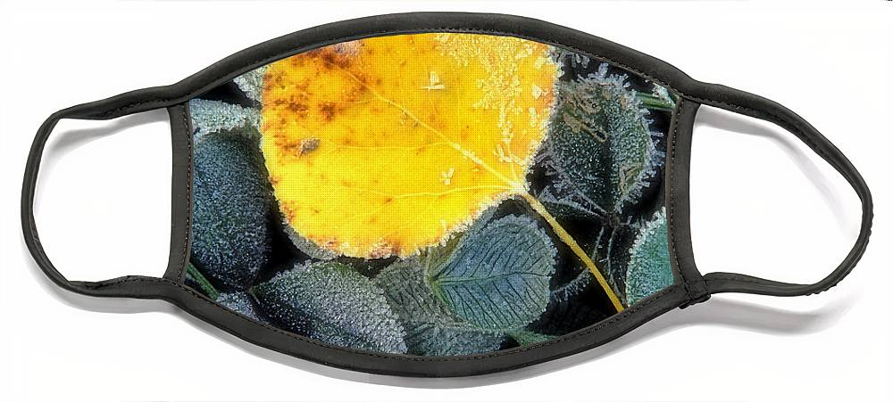 First Frost Face Mask featuring the photograph Gold On Green by Bill Morgenstern