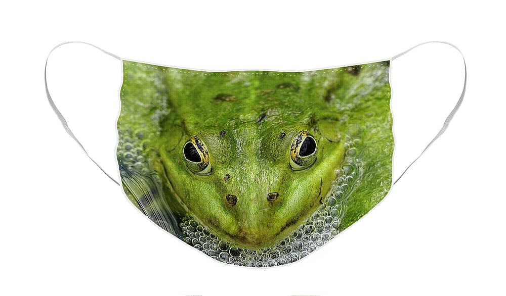 Cute Green Frog Fashion Face Mask
