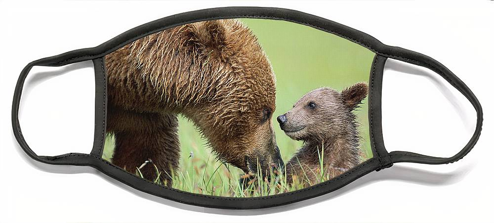 00345260 Face Mask featuring the photograph Grizzly Bear And Cub in Katmai by Yva Momatiuk John Eastcott