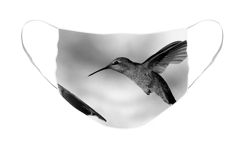 Hummingbird In Black And White Face Mask featuring the photograph Hummingbird in Black and White by Carol Groenen