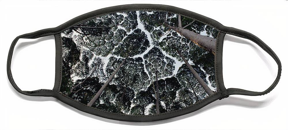 Feb0514 Face Mask featuring the photograph Kapur Trees Showing Crown Shyness by Mark Moffett