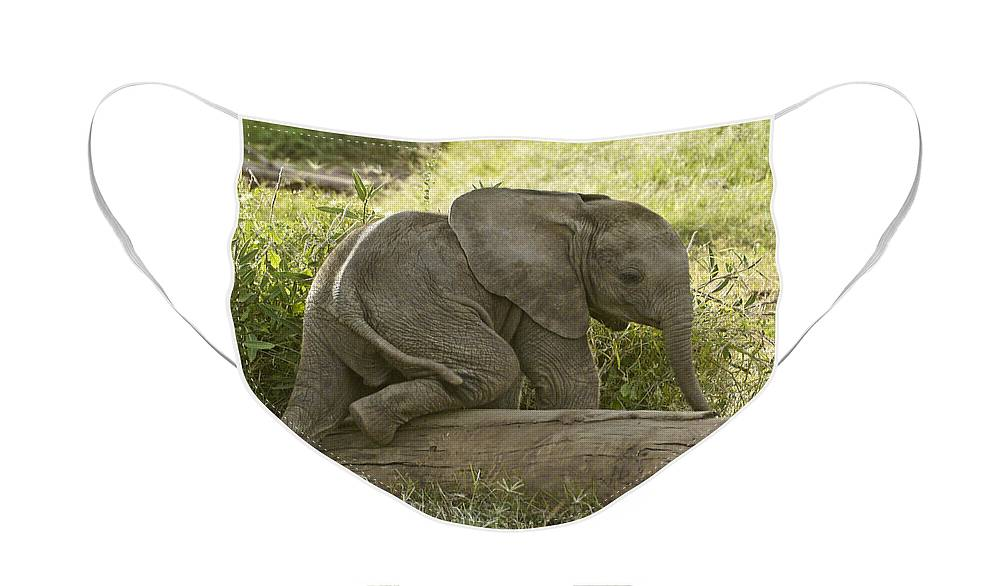 Africa Face Mask featuring the photograph Little Elephant Big Log by Michele Burgess
