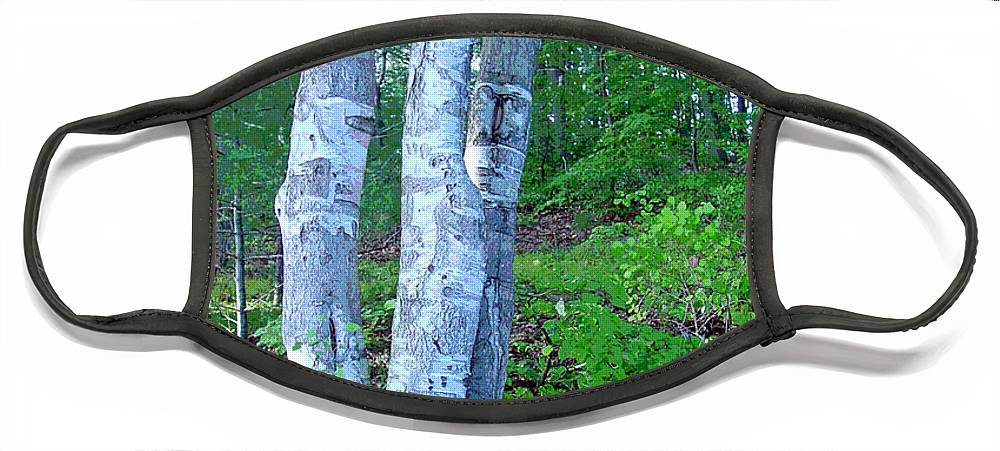 Birch Tree Face Mask featuring the photograph Lone Birch in the Maine Woods by Suzanne Gaff