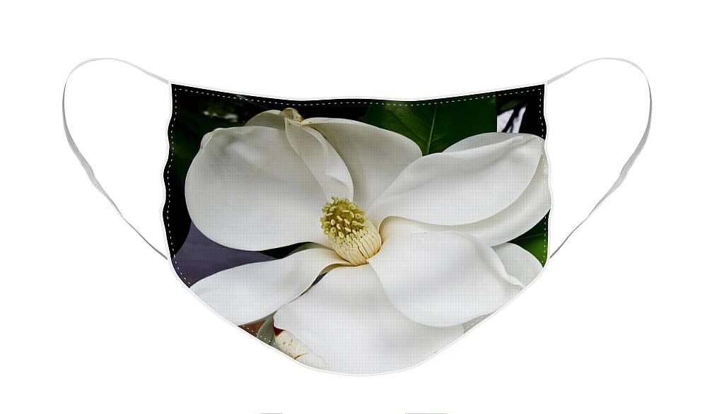 Magnolia Face Mask featuring the photograph Magnolia One by Paul Anderson