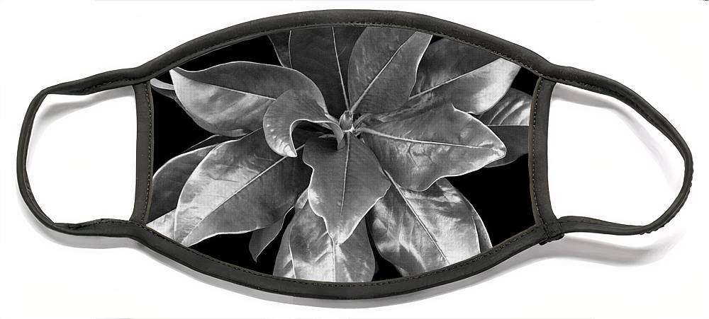 Magnolia Face Mask featuring the photograph Magnolia Tree Leaves by Marilyn Hunt