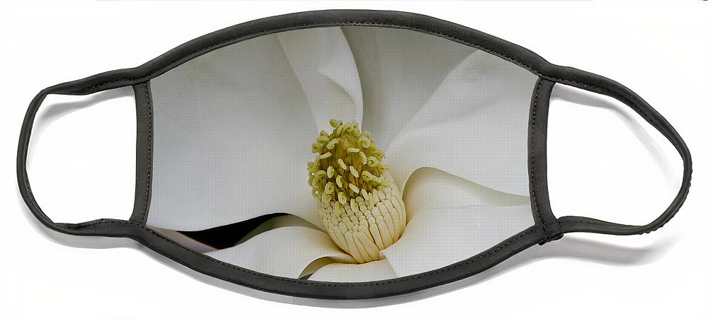 Magnolia Face Mask featuring the photograph Magnolia Two by Paul Anderson