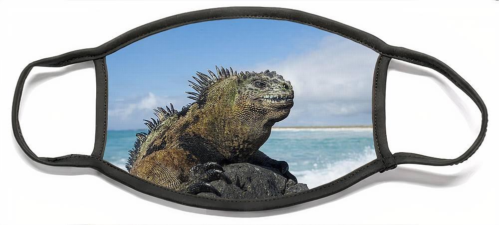 Tui De Roy Face Mask featuring the photograph Marine Iguana Turtle Bay Santa Cruz by Tui De Roy