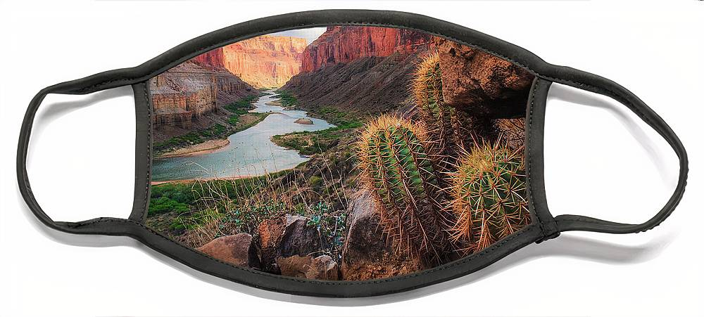 America Face Mask featuring the photograph Nankoweap Cactus by Inge Johnsson