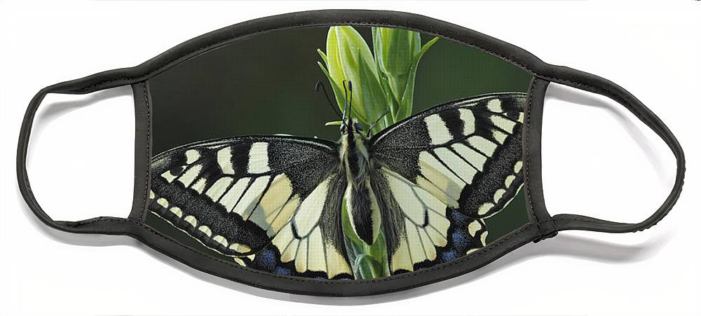 Silvia Reiche Face Mask featuring the photograph Oldworld Swallowtail Butterfly by Silvia Reiche