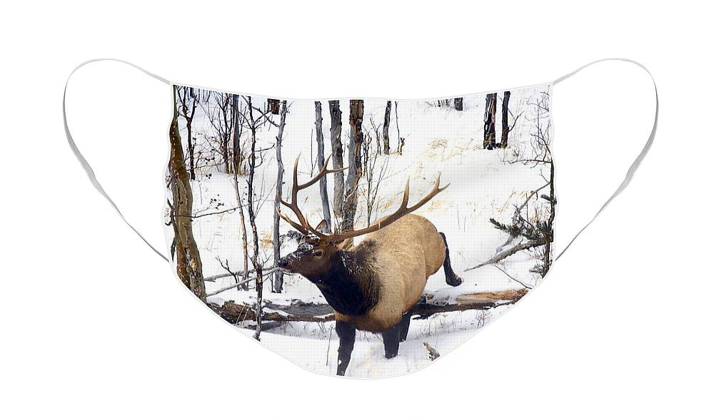 Elk Face Mask featuring the photograph On the Move by Mike Dawson