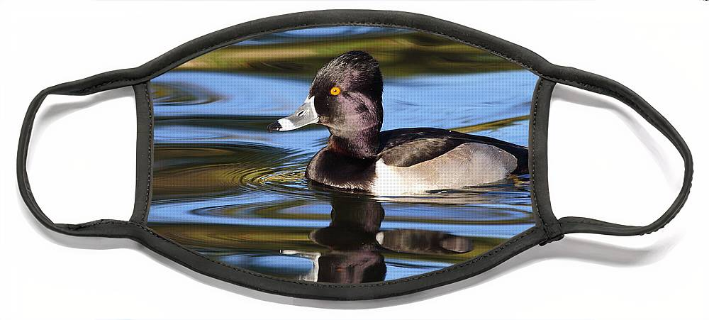 Ring-necked Duck Face Mask featuring the photograph Rings around Ring-necked Duck by Andrew McInnes
