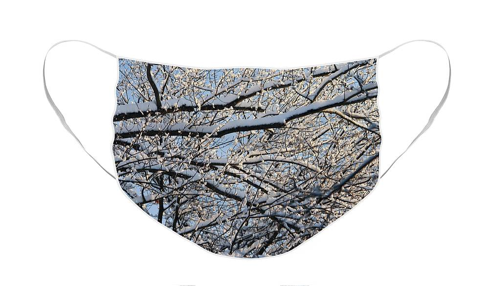 Snow Face Mask featuring the photograph Snow Covered Branches 2 by Teresa Mucha