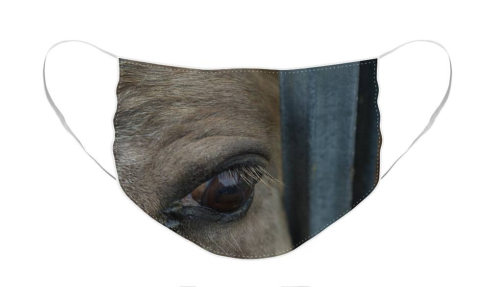 Penetrating Gaze Face Mask featuring the photograph Soul Searching Eyes by Peter Piatt