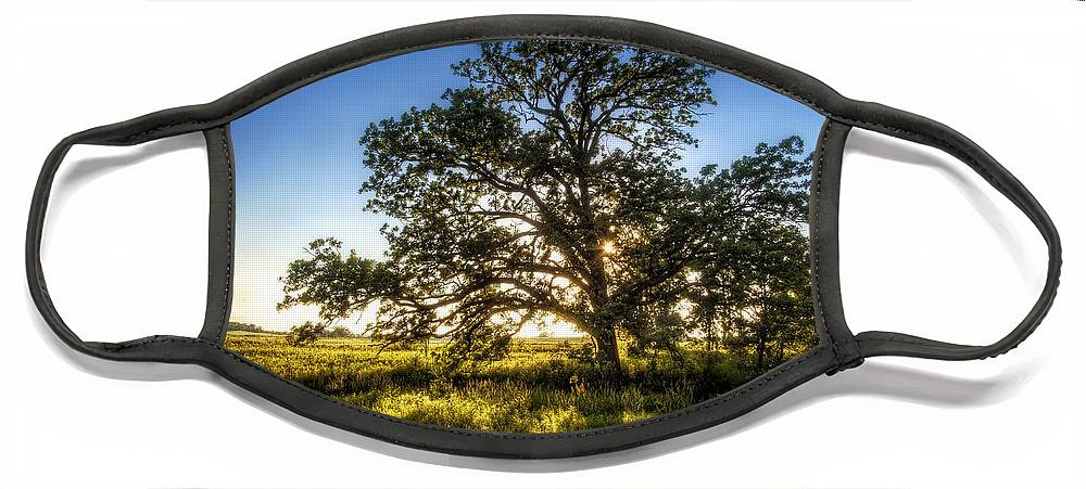 Sunset Face Mask featuring the photograph Sunset Oak by Scott Norris