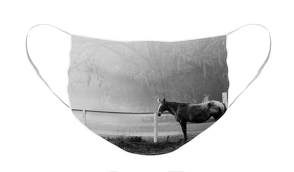 Lowcountry Face Mask featuring the photograph The horse and the fog by Scott Hansen