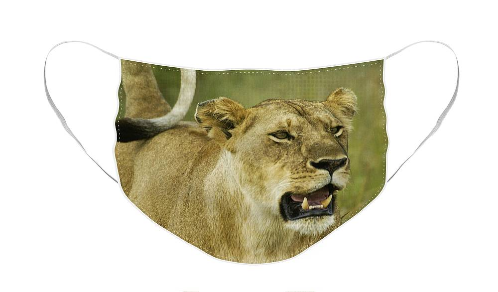 Africa Face Mask featuring the photograph The Tail Rules by Michele Burgess