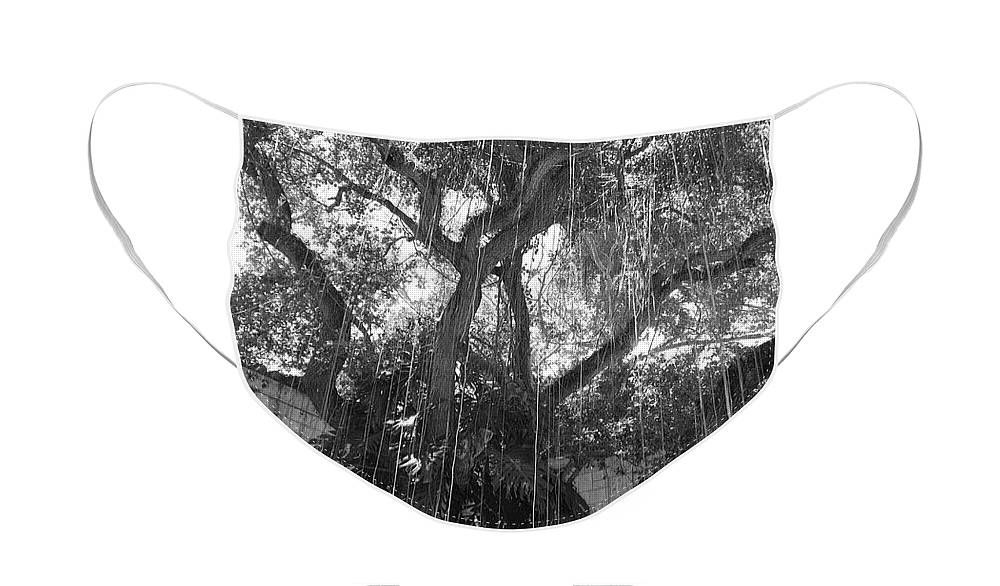 Black And White Face Mask featuring the photograph The Tree Vines by Rob Hans