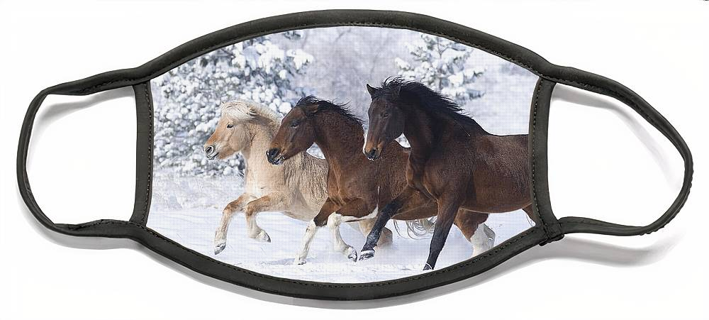Horse Face Mask featuring the photograph Three Snow Horses by Carol Walker