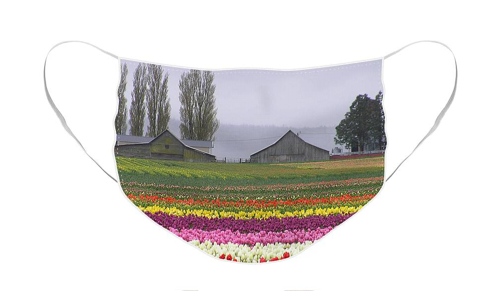 Tulips Face Mask featuring the photograph Tulip Town Barns by Louise Magno