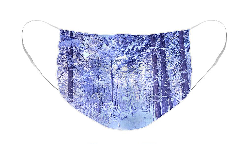 Winter Face Mask featuring the photograph Winter Solace by Tara Turner