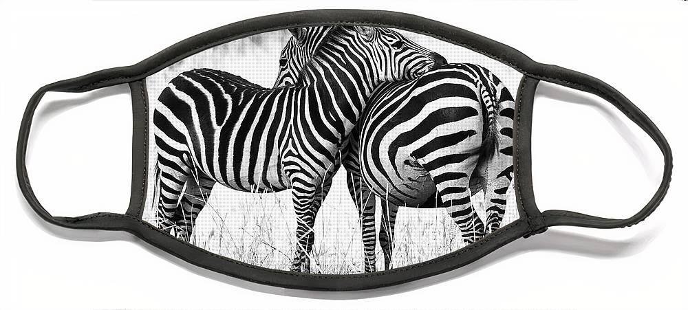 3scape Face Mask featuring the photograph Zebra Love by Adam Romanowicz