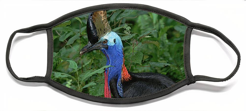 Mp Face Mask featuring the photograph Southern Cassowary Casuarius Casuarius by Konrad Wothe