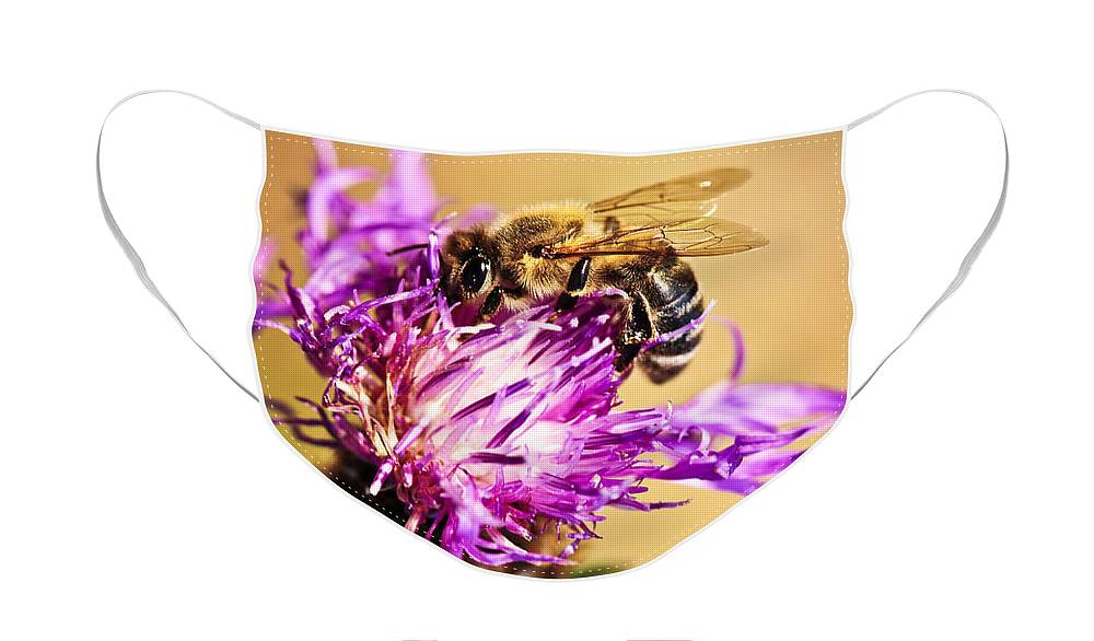 Honey Face Mask featuring the photograph Honey bee by Elena Elisseeva