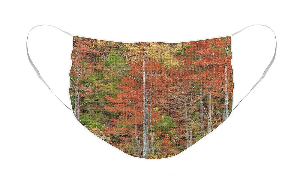 Landscape Face Mask featuring the photograph Cypress Trees by Iris Greenwell
