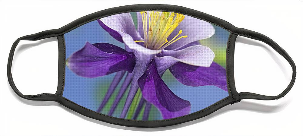 00176669 Face Mask featuring the photograph Colorado Blue Columbine Close by Tim Fitzharris