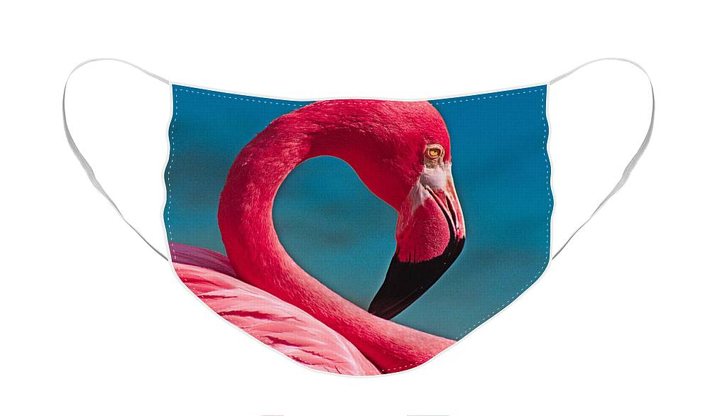 Flamingo Face Mask featuring the photograph Flexible Flamingo by Michele Burgess