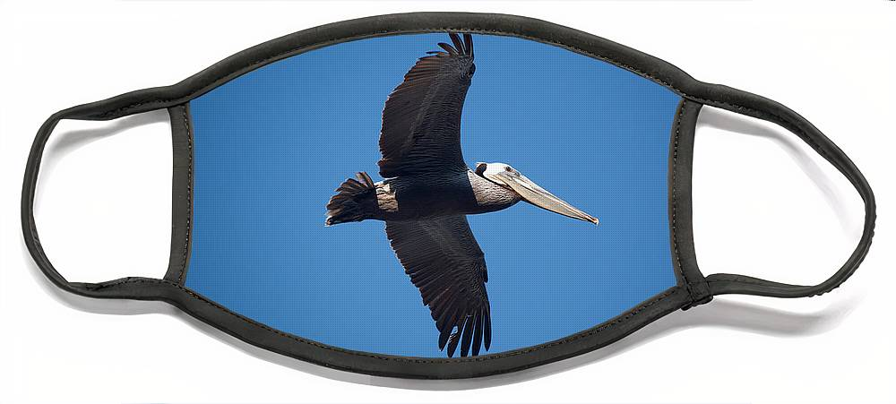 Pelican Face Mask featuring the photograph flying Pelican by Ralf Kaiser