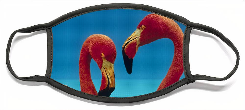 00172310 Face Mask featuring the photograph Greater Flamingo Courting Pair by Tim Fitzharris