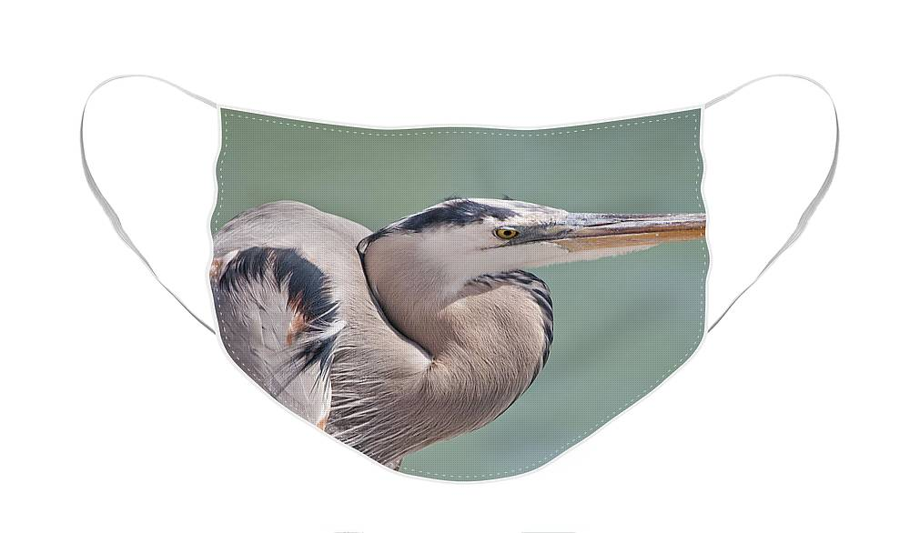 Great Blue Heron Face Mask featuring the photograph La Garza by Steven Sparks