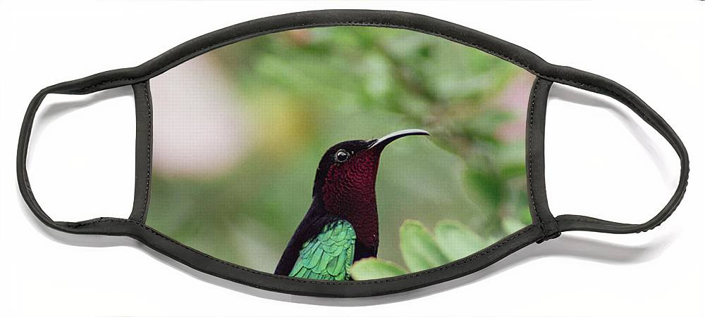 Mp Face Mask featuring the photograph Purple-throated Carib Eulampis by Gerry Ellis