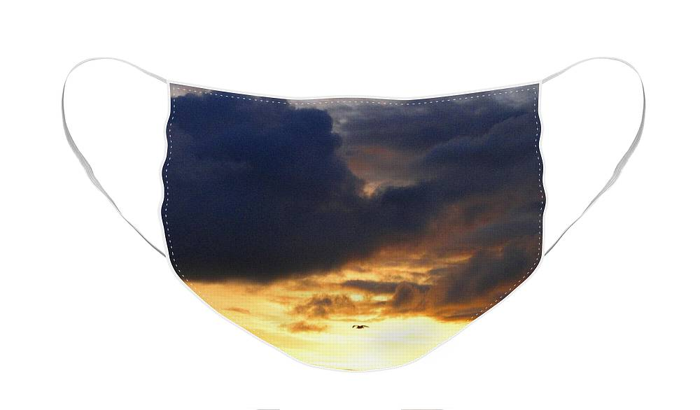 Silhouetted Seagull Face Mask featuring the photograph Silhouetted Seagull At Sundown by Will Borden