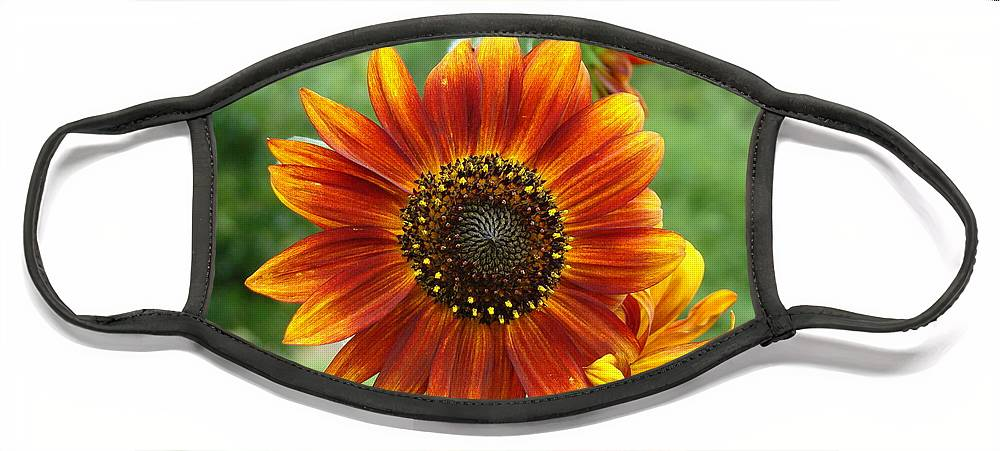 Red Sunflower Face Mask featuring the photograph Sunflower by Lisa Rose Musselwhite