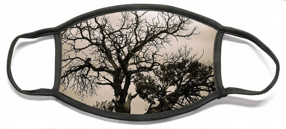 Nature Face Mask featuring the photograph Western Winter Tree by Marilyn Hunt