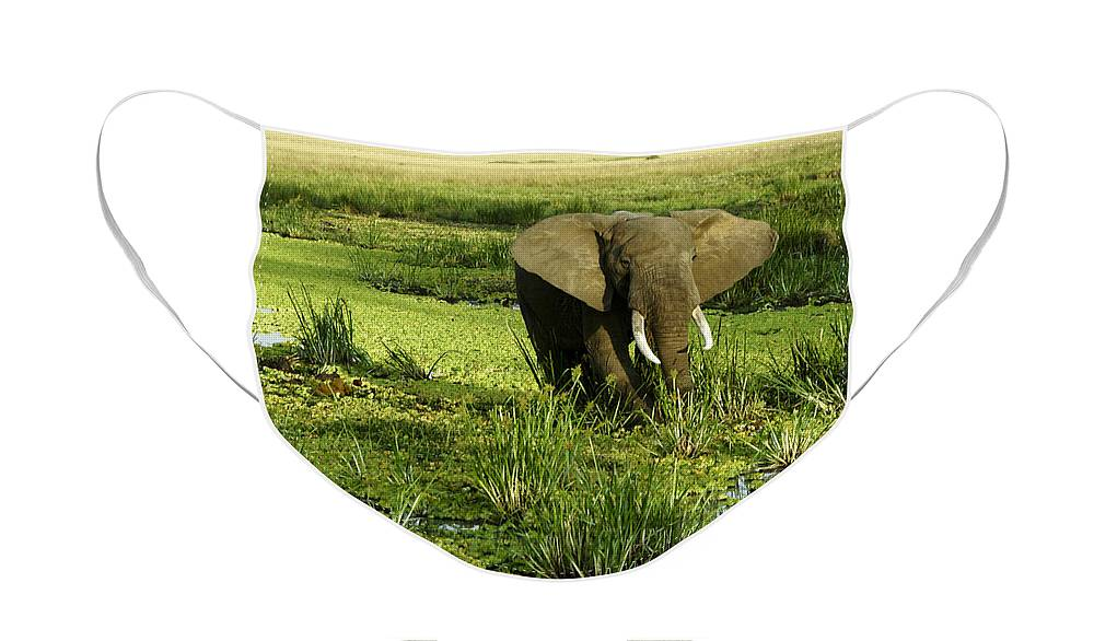 Africa Face Mask featuring the photograph African Elephant in Swamp by Michele Burgess