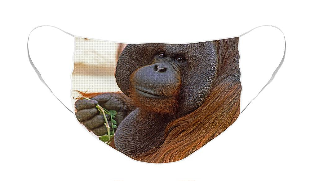 Orangutan Face Mask featuring the photograph Big Daddy by Michele Burgess