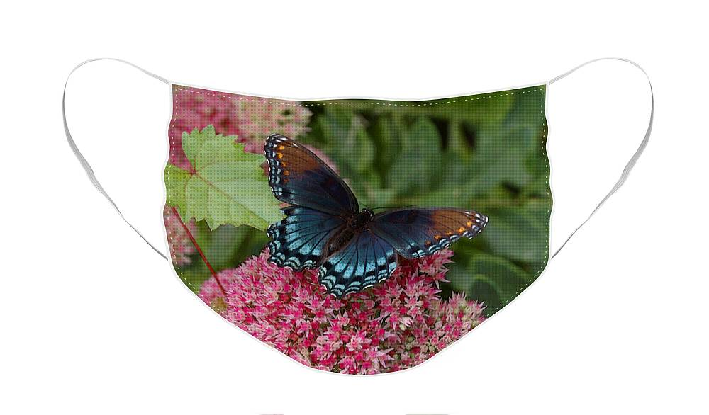 Blue Face Mask featuring the photograph Blue Butterfly by Suzanne Gaff